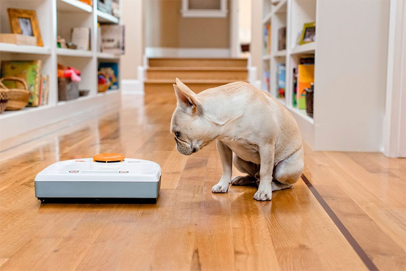Робот-пылесос - особенности выбора устройства для дома с животными