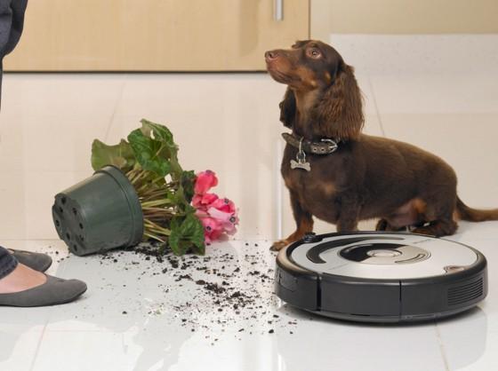 домашние животные и робот-пылесос